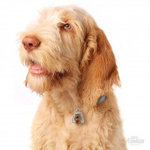 Médaille Spinone