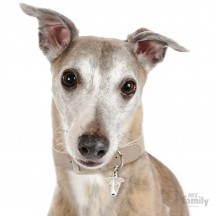 Médaille Greyhound