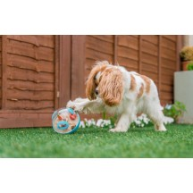Wobble Ball Toy Bleu - P.L.A.Y. Pet Lifestyle and you